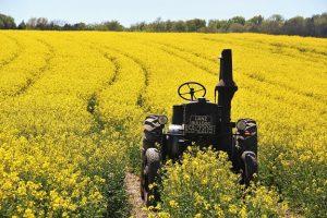 field-of-rapeseeds-1382772_1920